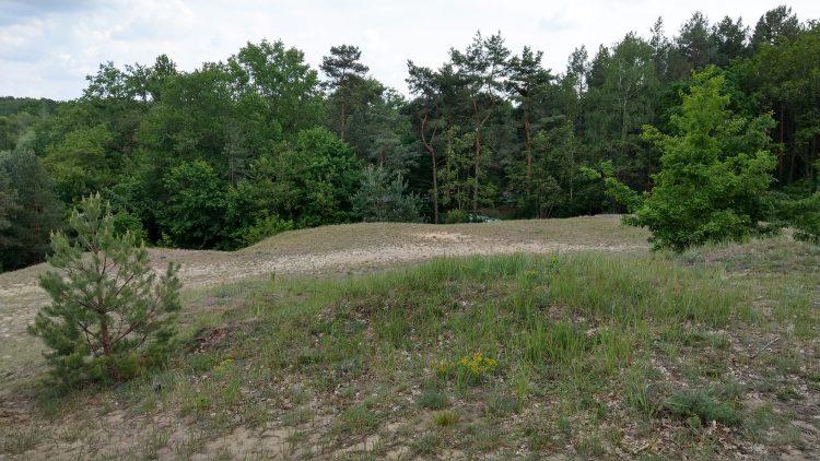 Gras- und Sandhügel, dahinter Bäume auf den Dünen der Baumberge in Berlin-Heiligensee