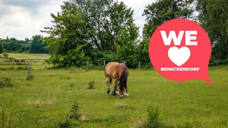 Hellbraunes Pferd grast auf einer grünen Weide, mit Bäumen und anderen Weiden im Hintergrund
