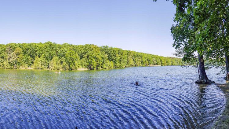 Schlachtensee im Sommer Panorama