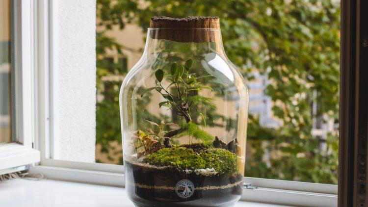 Flaschengarten auf einer Fensterbank.