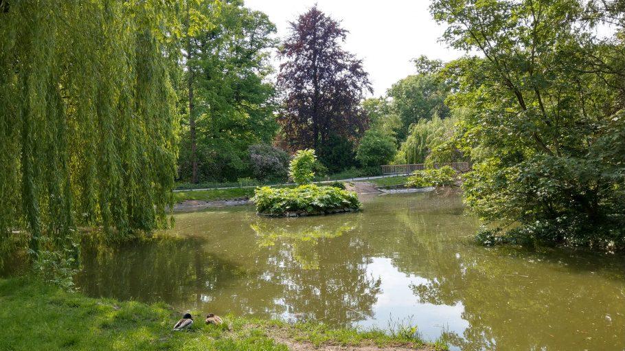 Teich in Park, Bäume und eine Brücke im Hintergrund, zwei Enten im Vordergrund