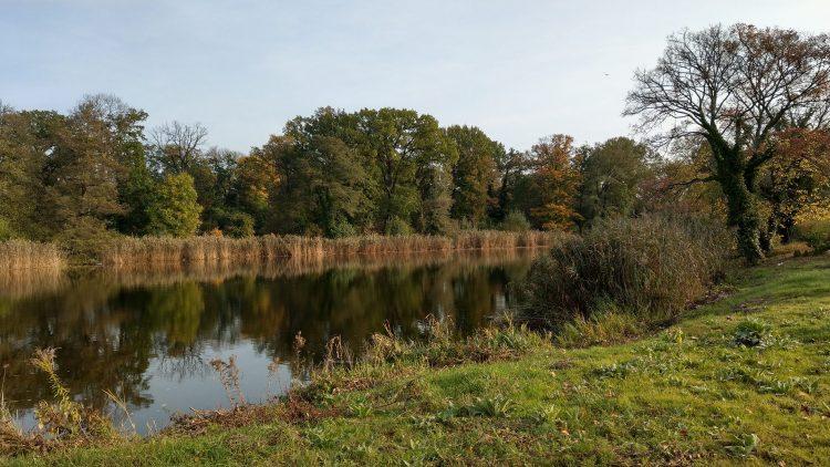 See mit Wiese im Vordergrund, Bäumen und Schilf jenseits des Wassers