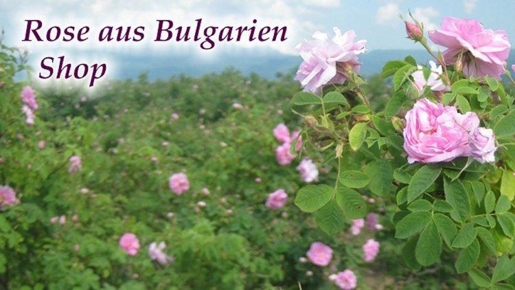 Ein blühendes Rosental mit rosa Blüten in Rumanänien.