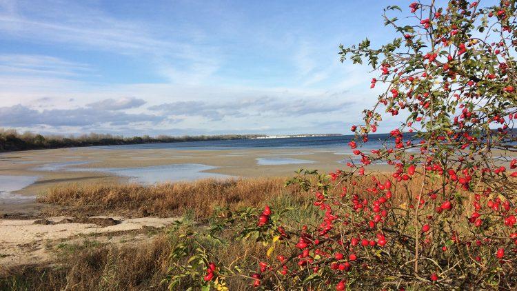 Ostseestrand mit Beeren unter blauem Himmel