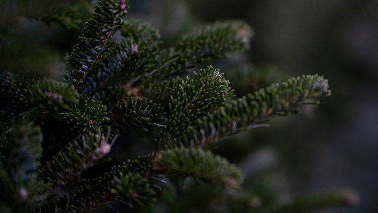 Nach den Feiertagen warten die Weihnachtsbäume darauf, abgeholt und geschreddert zu werden.