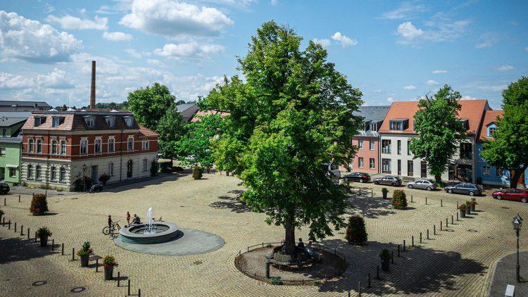 Gepflasterter Marktplatz von Werder mit umgebenden Häusern, einem großen Baum im Vordergrund, blauer Himmel