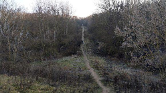 Pfad führt die Ahrensfelder Berge hoch, zwischen Bäumen und Sträuchern