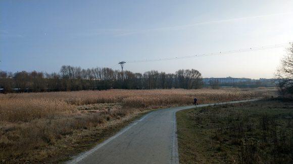 Wanderweg durchs Wuhletal mit Getreide links vom Weg und Seilbahnstützen im Hintergrund