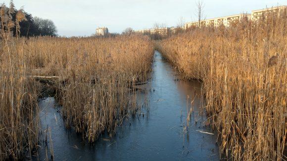 Braune Gräser wachsen in Tal, das auch durch zugefrorenen Fluss durchquert wird, rechts Mietshäuser