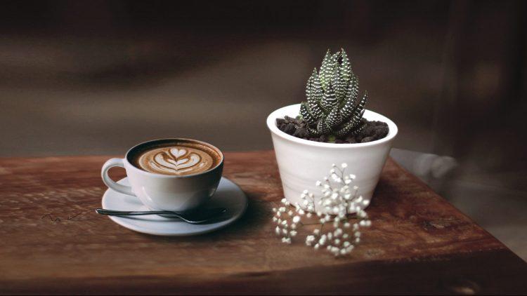 Kaffee und Pflanze im Floral Bistro in Neukölln
