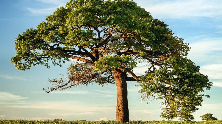 Ein großer Baum auf einer Wiese