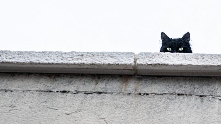 Kopf einer schwarzen Katze hinter Mauer