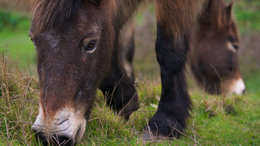 brown pony eating grass during daytime