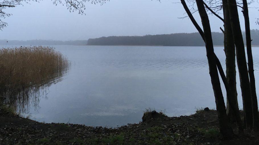 Blick auf Dranser See im Morgengrauen, Schilf, Ufer und Bäume