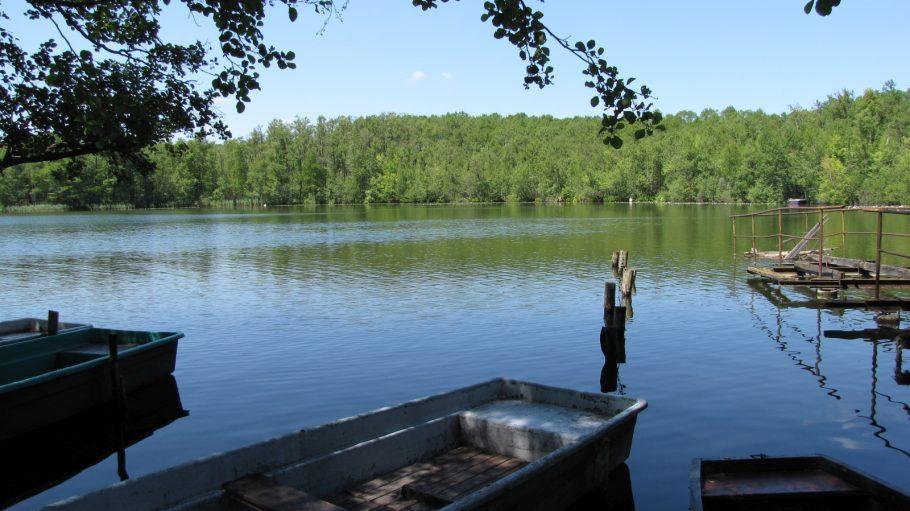 Großer Zeschsee mit Ruderbooten im Vordergrund, bewaldetes Ufer gegenüber