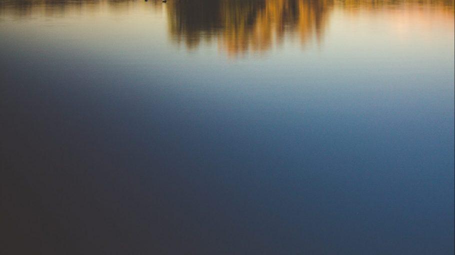Auf einer Wasserfläche spiegeln sich Bäume