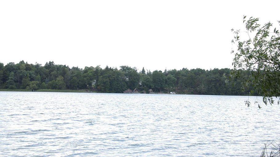 Straussee, Wasser mit Wald im Hintergrund