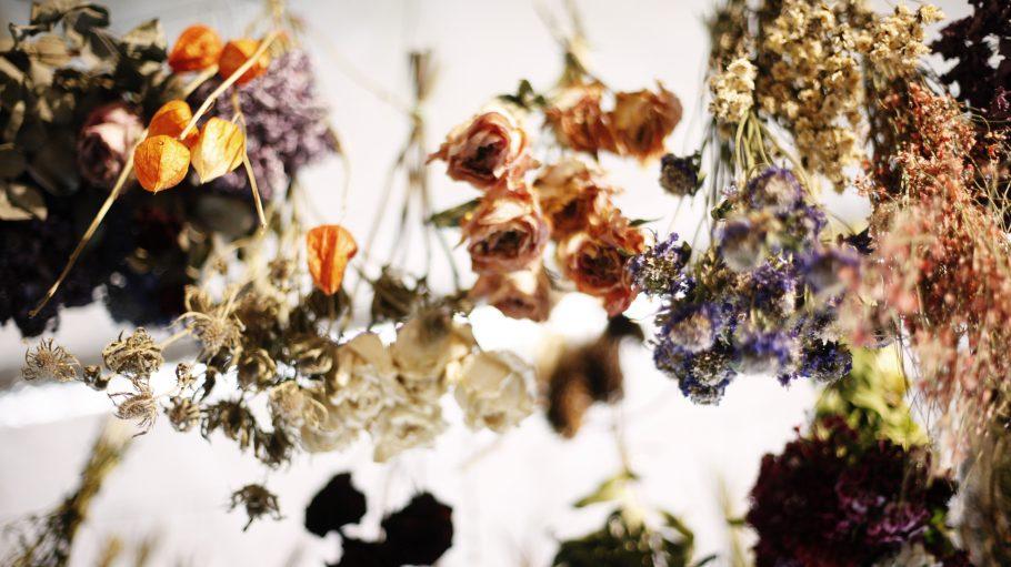 Trockenblumen hängend