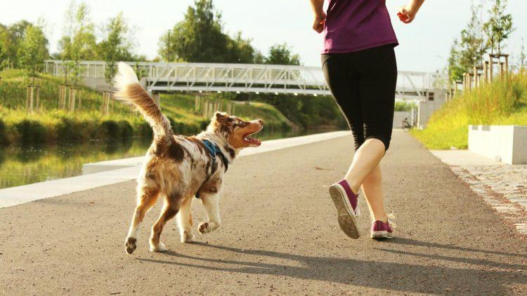 Hund und Jogger