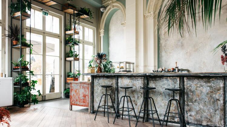 Tolle Pflanzen und großzügiger Altbaucharme machen das Café frank besonders.