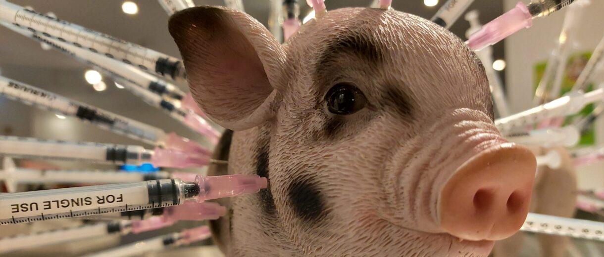 Hier erfährst du auch, was die Agrarindustrie so alles hineinspritzt ins Schweinefleisch.