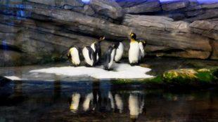 Tschüss, Pinguine! Jetzt geht's ab nach Hause.