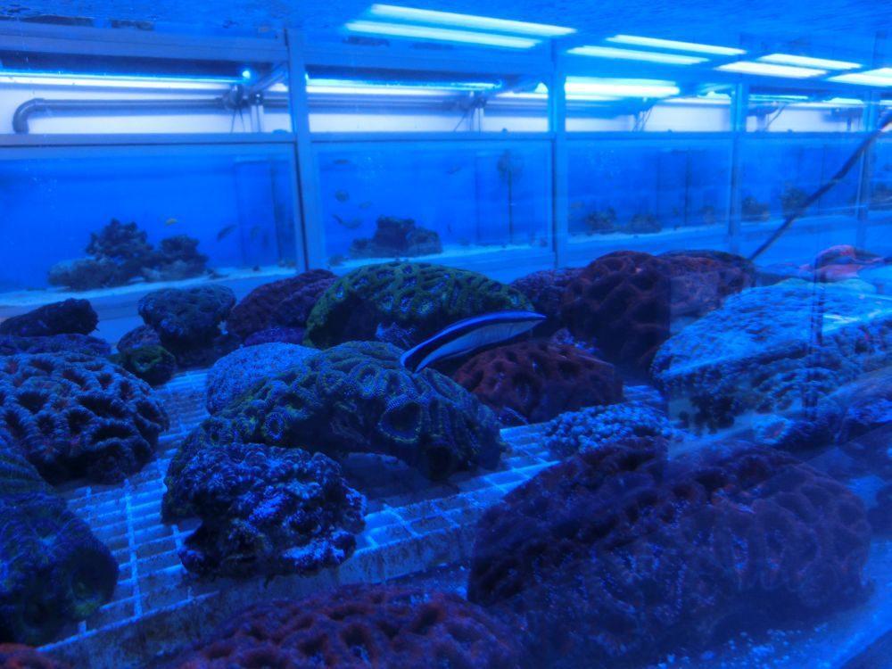 Aquaristik-Laden Into the Blue in Lichterfelde.jpg