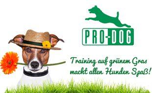 Hundeschule PRO-DOG