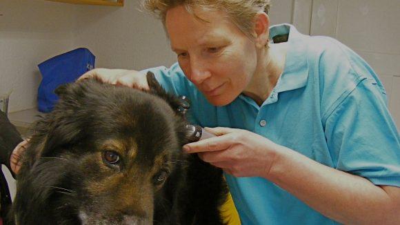 Tierärztin Dr. Dorothea Werning